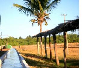 São Paulo: Fazenda de Eco-Turismo e Camarão e Peixe em Tibau do Sul, Sibaúma 10