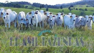 Eunápolis: Fazenda em Eunápolis BA a 85 km .433 Ha 2
