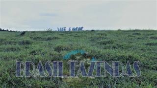 Eunápolis: Fazenda em Eunápolis BA a 85 km .433 Ha 6