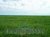 Eunápolis: Fazenda no Pará.72 mil hectares na pecuária 10