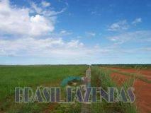 Eunápolis: Fazenda no Pará.72 mil hectares na pecuária 2