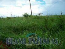 Eunápolis: Fazenda no Pará.72 mil hectares na pecuária 3