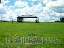 Eunápolis: Fazenda no Pará.72 mil hectares na pecuária 4