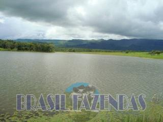 Eunápolis: Fazenda no Pará.72 mil hectares na pecuária 5