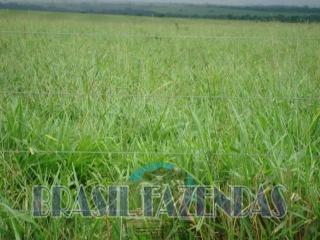 Eunápolis: Fazenda no Pará.72 mil hectares na pecuária 6