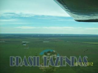 Eunápolis: Fazenda no Pará.72 mil hectares na pecuária 7