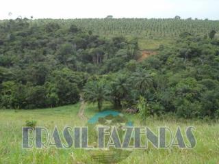 Eunápolis: fazenda na Bahia. Coco 10