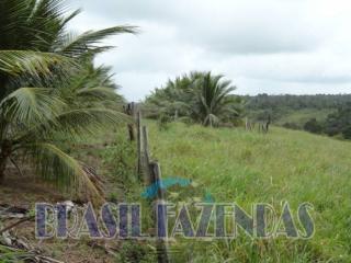 Eunápolis: fazenda na Bahia. Coco 11