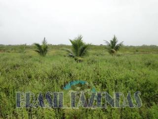 Eunápolis: fazenda na Bahia. Coco 15