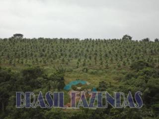 Eunápolis: fazenda na Bahia. Coco 9