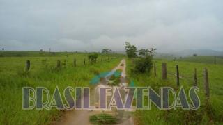 Eunápolis: Fazenda em Itamaraju 4 mil hectares 2