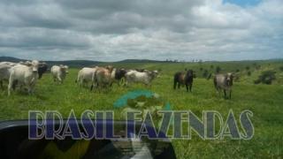 Eunápolis: Fazenda em Itamaraju 4 mil hectares 4