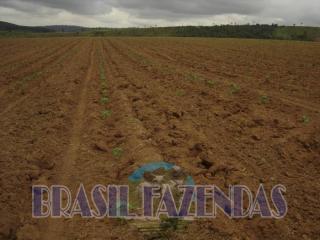 Eunápolis: Fazenda em Itamaraju 4 mil hectares 6