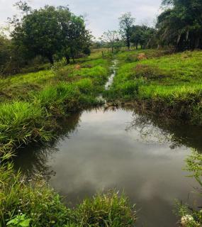 Cuiabá: VENDO!!! Uma fazenda na região de Rondonópolis com 104 alqueires (249.6 Hectares) 1