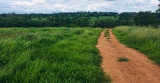 Cuiabá: VENDO!!! Uma fazenda na região de Rondonópolis com 104 alqueires (249.6 Hectares) 10