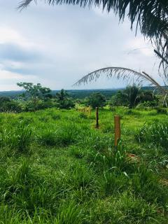 Cuiabá: VENDO!!! Uma fazenda na região de Rondonópolis com 104 alqueires (249.6 Hectares) 11