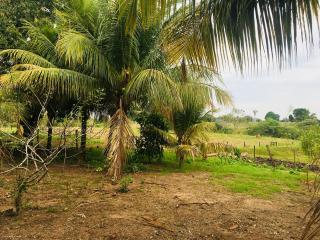 Cuiabá: VENDO!!! Uma fazenda na região de Rondonópolis com 104 alqueires (249.6 Hectares) 12
