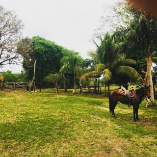 Cuiabá: VENDO!!! Uma fazenda na região de Rondonópolis com 104 alqueires (249.6 Hectares) 14