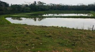 Cuiabá: VENDO!!! Uma fazenda na região de Rondonópolis com 104 alqueires (249.6 Hectares) 15