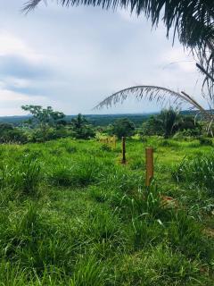 Cuiabá: VENDO!!! Uma fazenda na região de Rondonópolis com 104 alqueires (249.6 Hectares) 18
