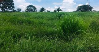Cuiabá: VENDO!!! Uma fazenda na região de Rondonópolis com 104 alqueires (249.6 Hectares) 19