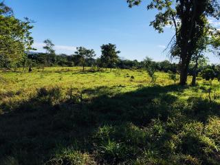 Cuiabá: VENDO!!! Uma fazenda na região de Rondonópolis com 104 alqueires (249.6 Hectares) 20
