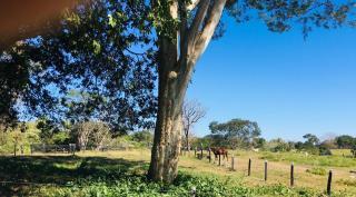 Cuiabá: VENDO!!! Uma fazenda na região de Rondonópolis com 104 alqueires (249.6 Hectares) 24