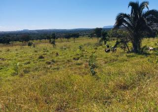 Cuiabá: VENDO!!! Uma fazenda na região de Rondonópolis com 104 alqueires (249.6 Hectares) 26