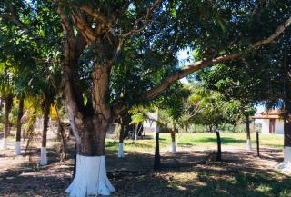Cuiabá: VENDO!!! Uma fazenda na região de Rondonópolis com 104 alqueires (249.6 Hectares) 4
