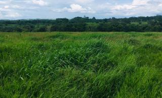 Cuiabá: VENDO!!! Uma fazenda na região de Rondonópolis com 104 alqueires (249.6 Hectares) 7