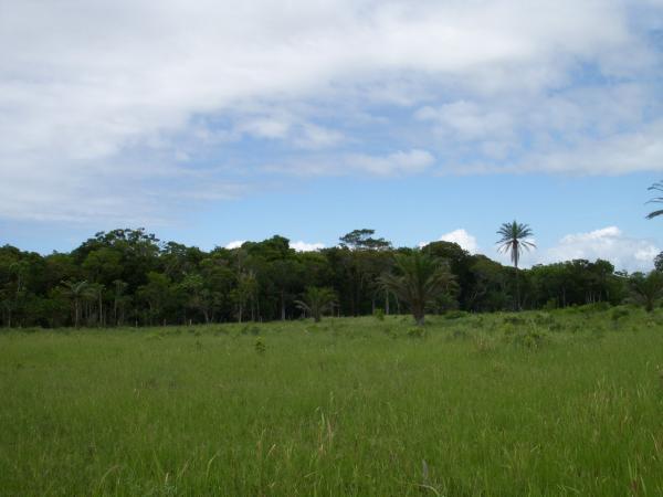São Paulo: Terreno para Eco Resort com 460 ha em Caravelas, no sul da Bahia 16