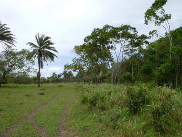 São Paulo: Terreno para Eco Resort com 460 ha em Caravelas, no sul da Bahia 17