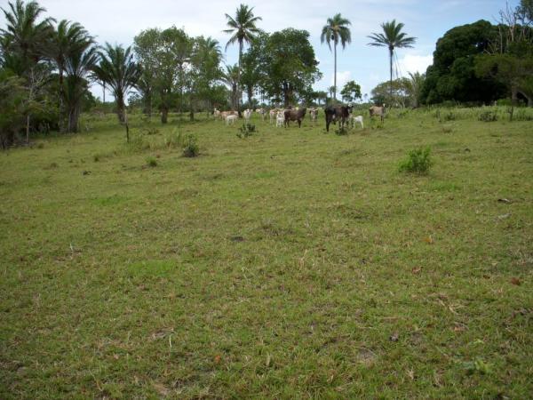 São Paulo: Terreno para Eco Resort com 460 ha em Caravelas, no sul da Bahia 18