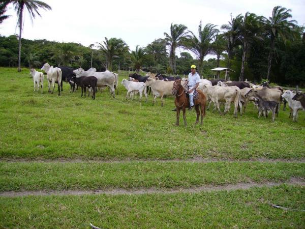 São Paulo: Terreno para Eco Resort com 460 ha em Caravelas, no sul da Bahia 1