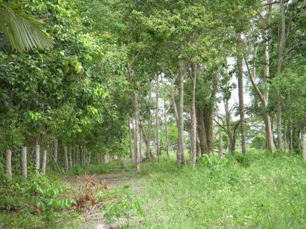 São Paulo: Terreno para Eco Resort com 460 ha em Caravelas, no sul da Bahia 20
