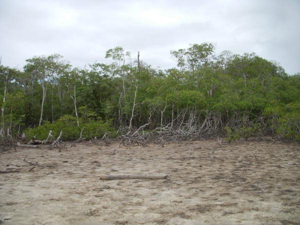 São Paulo: Terreno para Eco Resort com 460 ha em Caravelas, no sul da Bahia 22
