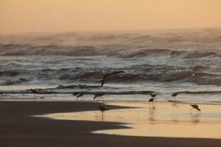 Sombrio: Balneário Gaivotas - SC, a praia que mais cresce no Extremo Sul de Santa Catarina 8