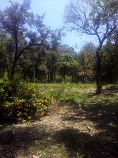 Vespasiano: Terreno para Venda, Vespasiano / MG, bairro Nova Pampulha 1