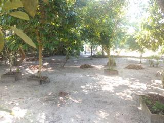 Barra Velha: Chácara com 2500m² com pomar, árvores frutíferas, área verde de pastagem com mais uma casa de 3 quartos 7