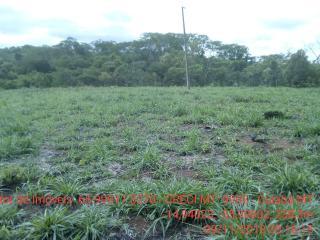 Cuiabá: VENDO!!! Um sítio de 15 hectares na estrada do Manso 58 km de asfalto + 21 de chão, 2