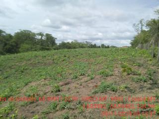 Cuiabá: VENDO!!! Um sítio de 15 hectares na estrada do Manso 58 km de asfalto + 21 de chão, 3