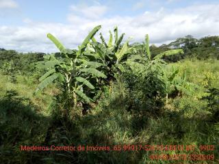 Cuiabá: VENDO!!! Um sítio de 15 hectares na estrada do Manso 58 km de asfalto + 21 de chão, 31