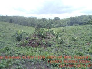Cuiabá: VENDO!!! Um sítio de 15 hectares na estrada do Manso 58 km de asfalto + 21 de chão, 4