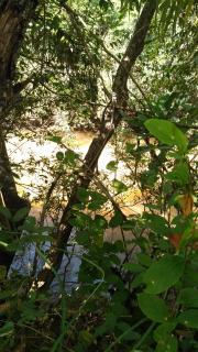Cuiabá: VENDO!!! Uma chácara com 2.81 hectares na região do bandeira 12 km de Cuiabá-MT, sendo 8 km de chão 19