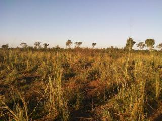 Cuiabá: VENDO!!! Um sítio com 29 hectares no assentamento Agro Ana na região do posto 120, sentido a cidade de Cáceres-MT. 1