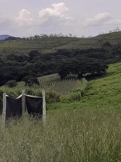Baependi: Sitio para plantio ou criação de gado em Baependi-MG 14