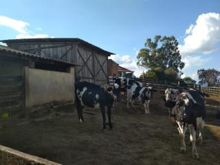 Baependi: Sitio muito agradável em Cruzília-MG 5