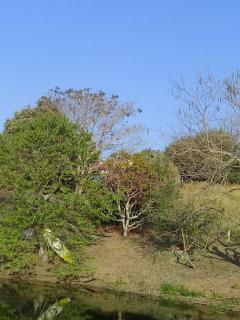 Baependi: Fazenda de 43 Hectares em Conceição 11