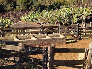 Baependi: Fazenda 64 Hectares á venda em Carvalhos-MG 12