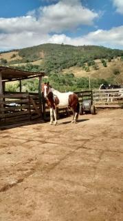 Baependi: Fazenda 64 Hectares á venda em Carvalhos-MG 14